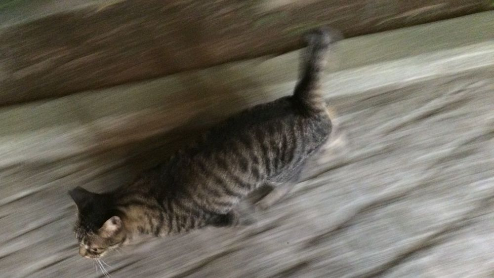 夜ねこ 野良猫 Stray Cat 走り猫