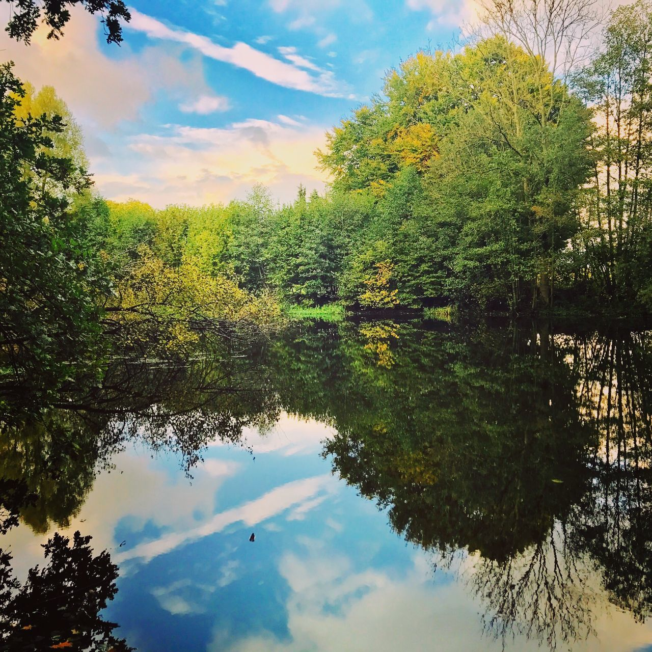 tree, sky, cloud - sky, nature, scenics, beauty in nature, reflection, tranquil scene, growth, no people, day, water, outdoors, tranquility, green color, low angle view