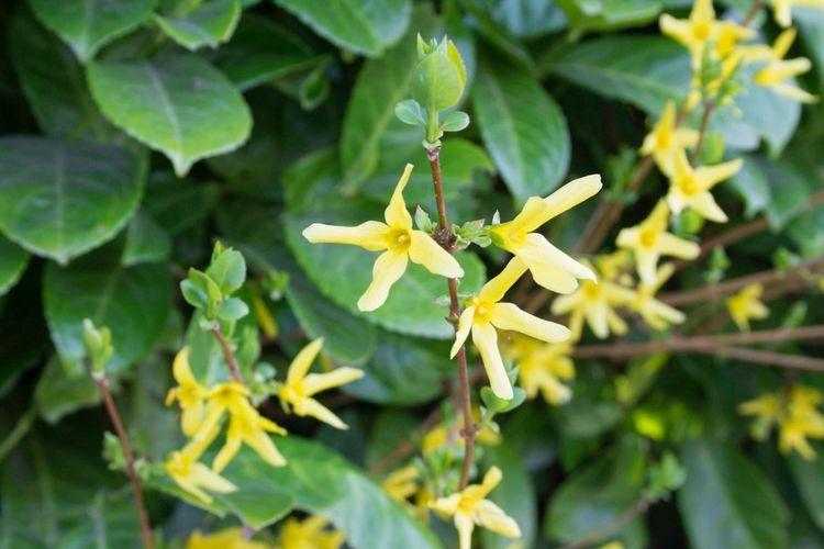 Flowers Taking