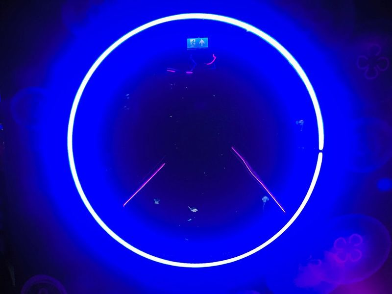 Jellyfish at the London Acquarium . Neon Funky Vivid Sealife Nature Mindblown  Trippy EyeEmNewHere