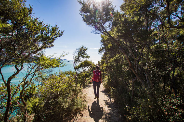 young woman hiking in the abel tasman national park Abel Tasman Nationalpark Adventure Beauty In Nature Day Forest Full Length Growth Hiking Land Leisure Activity Lifestyles Nature New Zaland One Person Outdoor Outdoors Pacific Ocean Plant Real People Rear View Sea Sky Tree Walking The Great Outdoors - 2018 EyeEm Awards Summer Sports