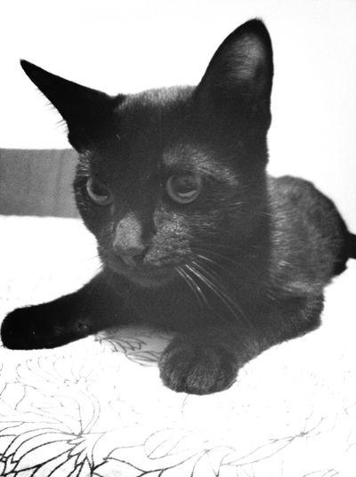 My Cat Love My Cat Jambinho