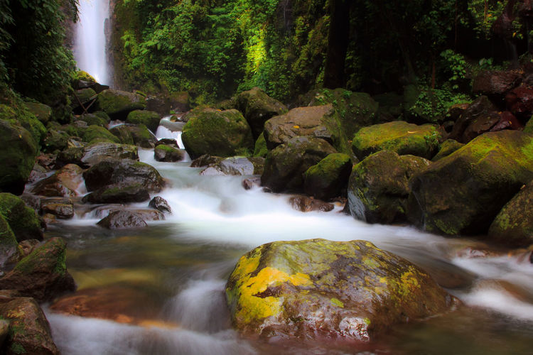 Ciparay waterfall, located in Bogor Indonesia Bogor INDONESIA Beauty In Nature Blurred Motion Falling Water Flowing Flowing Water Forest Long Exposure Motion Nature No People Outdoors Plant Power In Nature Rainforest River Rock Rock - Object Scenics - Nature Solid Stream - Flowing Water Tree Water Waterfall