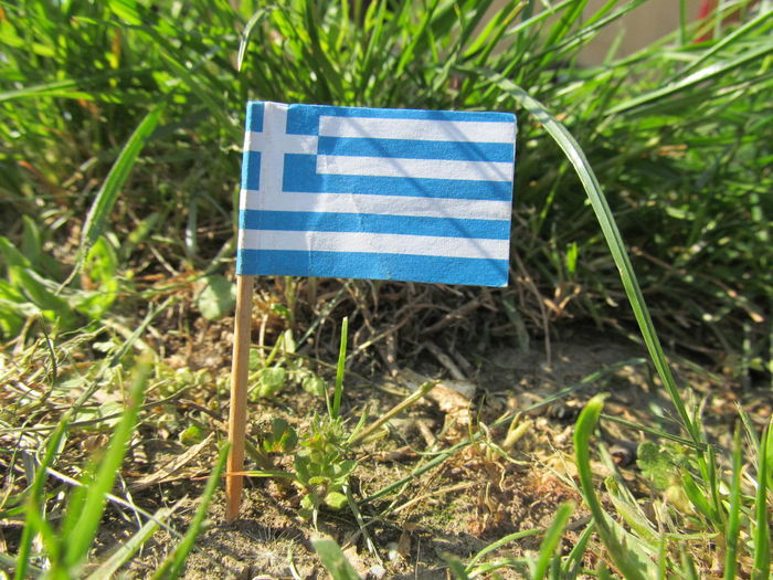 Miniature greek Flag in the Ground Flag Grass Greek Greek Flag Greek Style Greek Symbols Miniature Miniature Flag Souvenir Toothpick