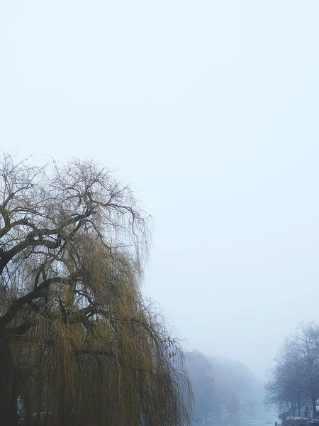 Fog Winter Riverbank Winter Trees