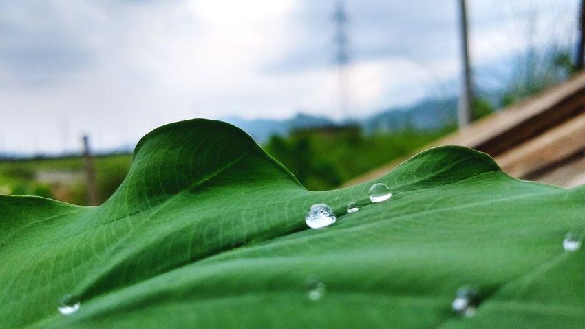 GOOD MORNING EYEMMERS Rainy Season