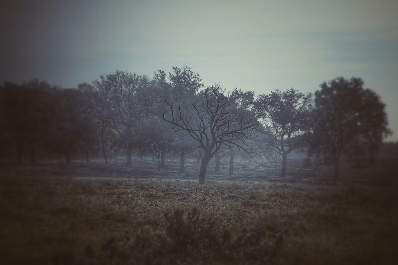 Lightseeker Soul Searching Soulseeker Dutch Countyside Landscape_Collection Landscape_photography Taking Photos Eye4photography  Canon Canonphotography Snapseed Canon EOS 70D Tree_collection  Intothewild EyeEm Nature Lover Nature_collection Nature_perfection ForTheLoveOfNature Capture The Moment
