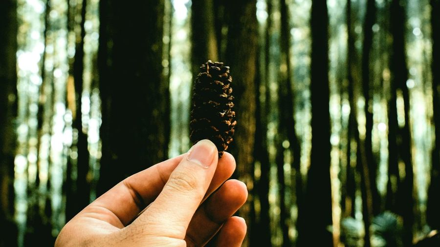 Close-up of hand holding pine cone in forest