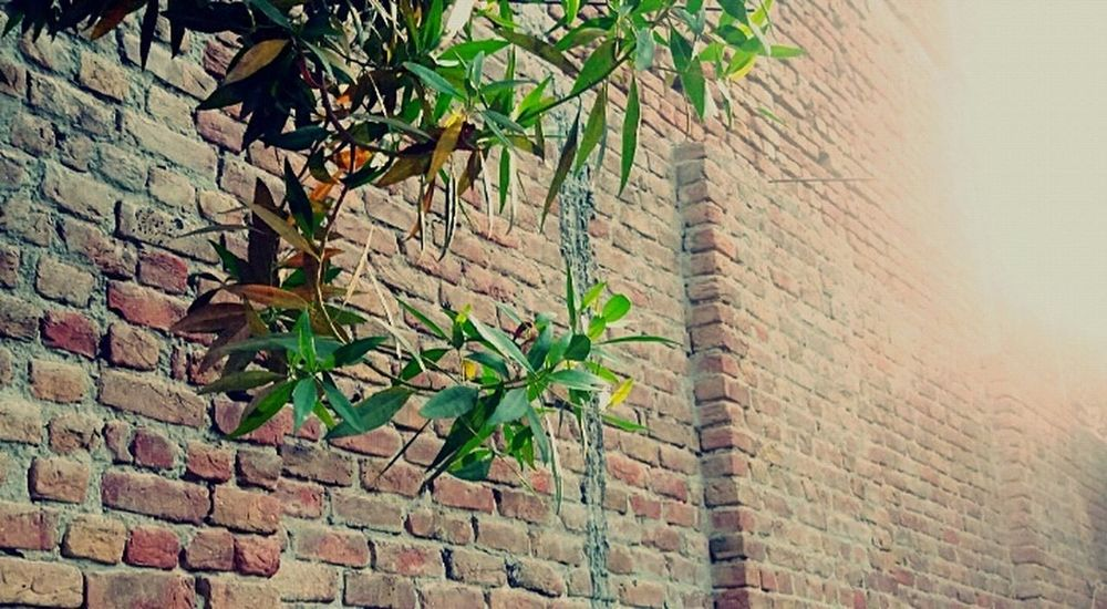 Brick Wall Plant Leaf No People Day Close-up Wanderlust See The World Through My Eyes Photographing Life's Simple Pleasures... See What I See Photo Diary Nature Enjoying The Moment Fragility Freshness MyLoveForNature Tranquility Myloveforphotography Peace Of Mind Flawsome Beauty In Nature Enjoying Nature Lifeisgood Seeing The World Differently