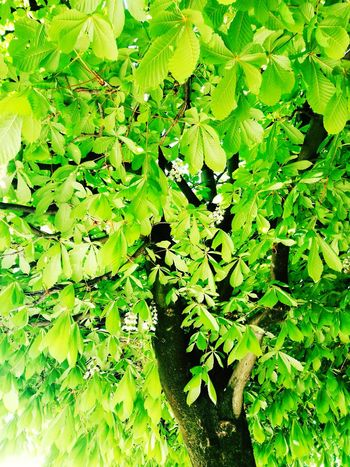 Arbre Beauty In Nature Nature Nature Photography Tree Tranquility Sun Sunlight France Day Colors Jardin Des Tuileries Jardin Paris