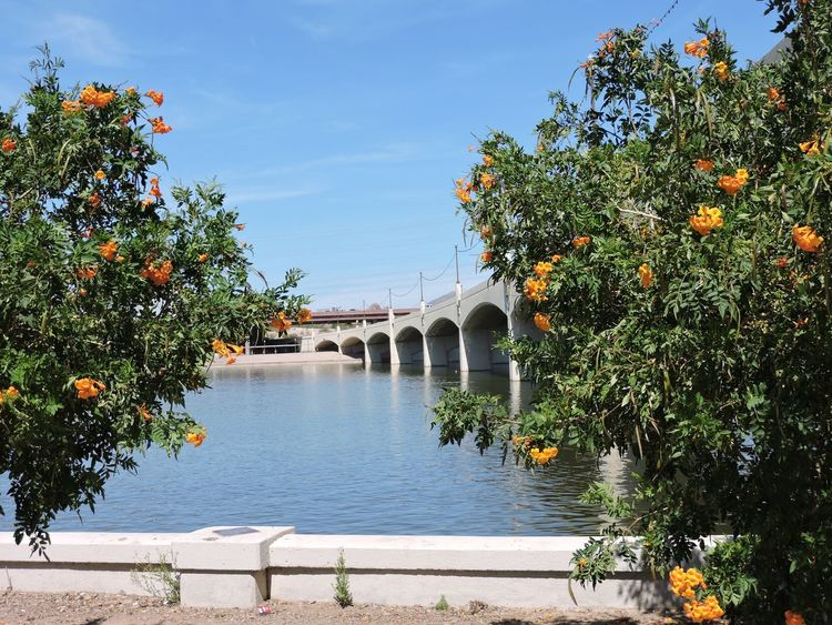 Trees in front of bridge Tree Architecture Travel Destinations History Shadow Tranquility No People City Tourism Bridge - Man Made Structure Sky Built Structure Outdoors Water Nature Vacations Day