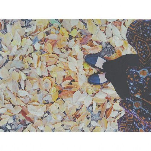 Fall Autumn Leaves Tagsforlikes Falltime Clouds Seasons Instafall Instagood Shoes Instaautumn Photooftheday Leaf Foliage Colorful Orange Red Autumnweather Fallweather Nature