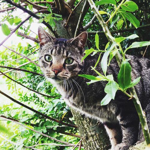 #Cat#Outdoor Animal Themes Feline Animal One Animal Vertebrate Pets Nature Portrait Domestic Cat Domestic Animals Domestic Growth