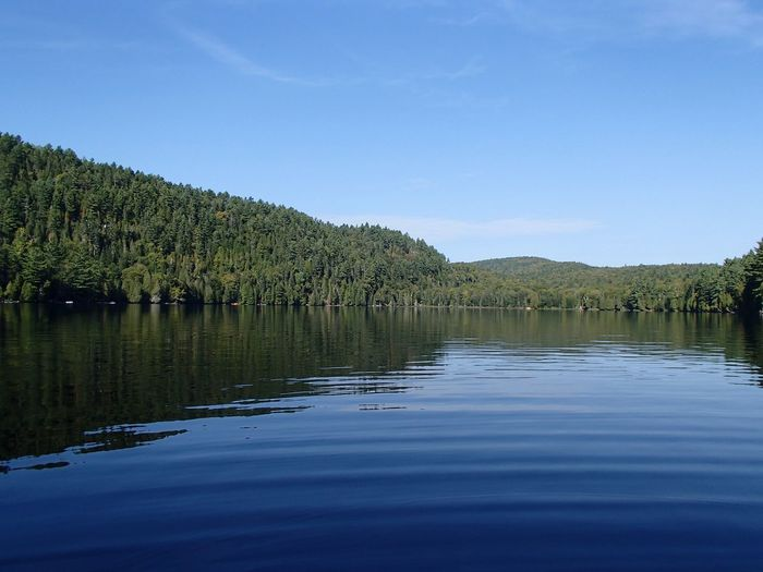 Forêt mixte laurentienne - Laurentian Mixed Forest (Lac Jackson) Water Tree Sky Plant Tranquility Beauty In Nature Scenics - Nature Lake Reflection Tranquil Scene Nature Clear Sky Idyllic Outdoors Reflection Lake