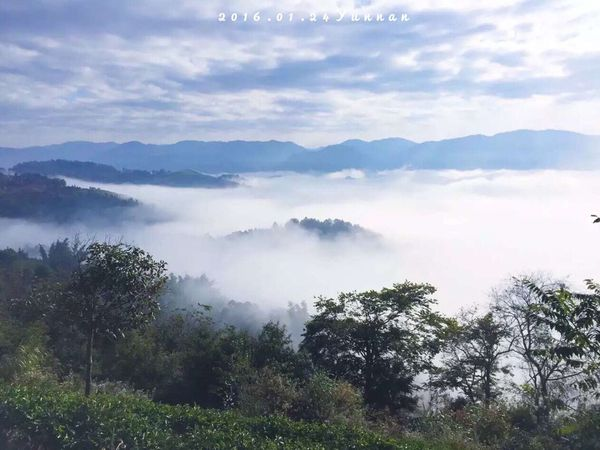 國境之南的雲海,途經層層疊障的山巒,雲海印入眼簾,美不勝收。 Enjoying Life Photography First Eyeem Photo Hello World Clouds Trees Hill