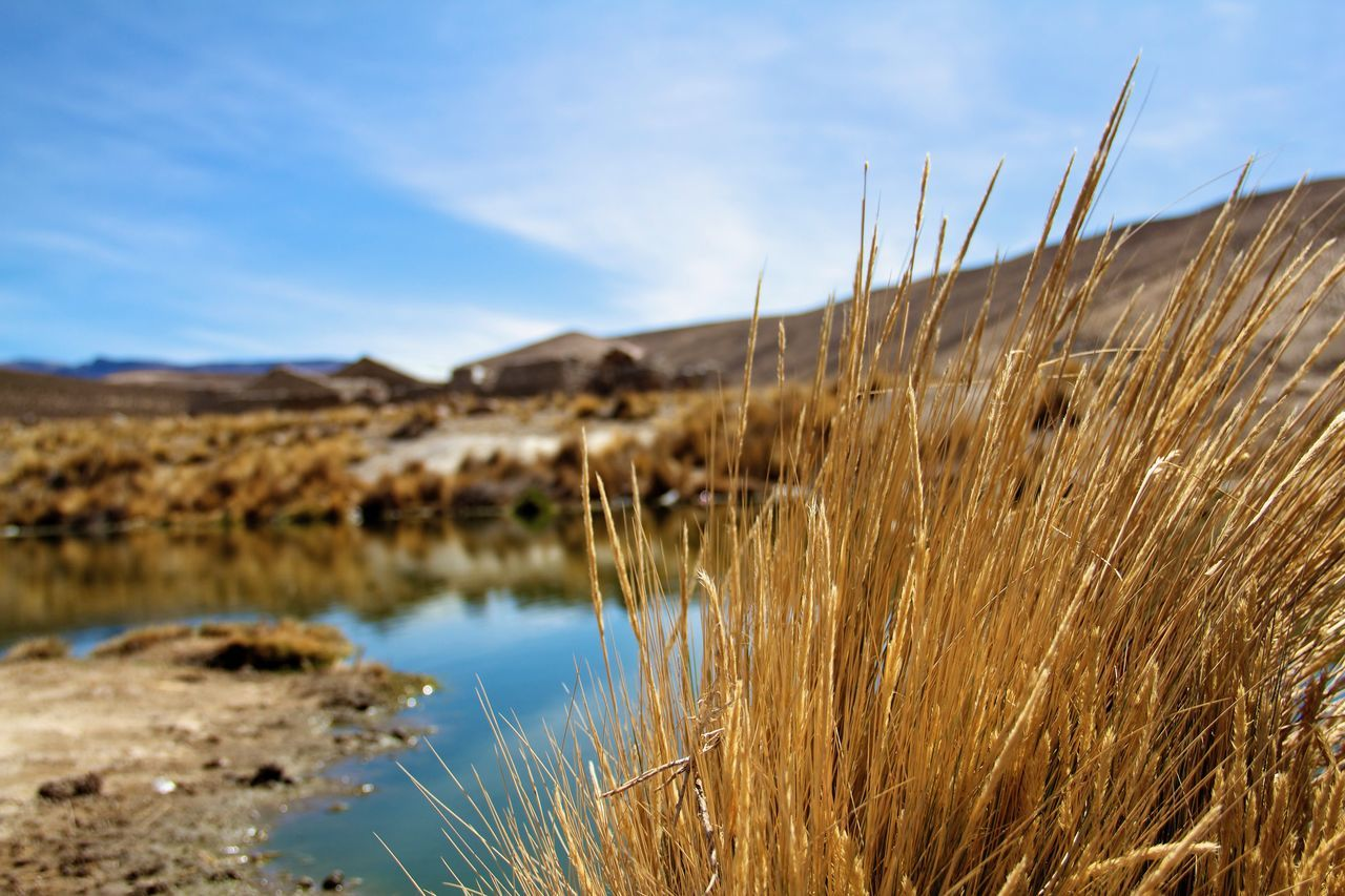 tranquil scene, nature, sky, tranquility, beauty in nature, scenics, no people, outdoors, day, plant, mountain, landscape, growth, grass, water, close-up