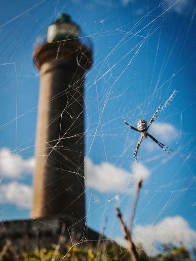 Le phare et l'araigné nouveau sur la toile Headlight Island Petite Terre Nature Photography Naturelovers Désirade Nature Bleu Sky Beautiful Place Insect Animal Leg Close-up Arachnid
