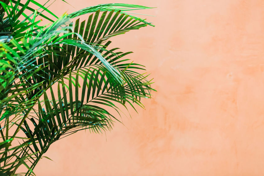 Beauty In Nature Branch Close-up Day Focus On Foreground Green Color Growth Leaf Leaves Low Angle View Nature No People Outdoors Palm Leaf Palm Tree Plant Plant Part Tranquility Tree Tropical Climate Wall - Building Feature