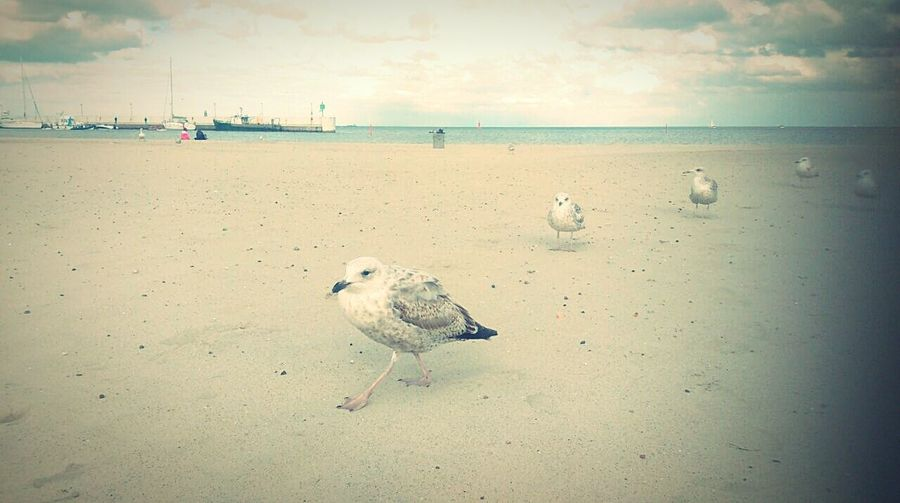 Beach Taking Photos Enjoying Life Birds Relaxing Hello World Nature
