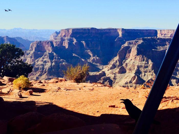 Grandcanyon Arizona Wonderful Blessed  Magic Moments Nature_collection Paradise Taking Photos Amazing View Landscape Colors Enjoying Life Love Roadtrip On The Road EndlessLove Peaceful Tksgod Grandcanyonnationalpark View Trip