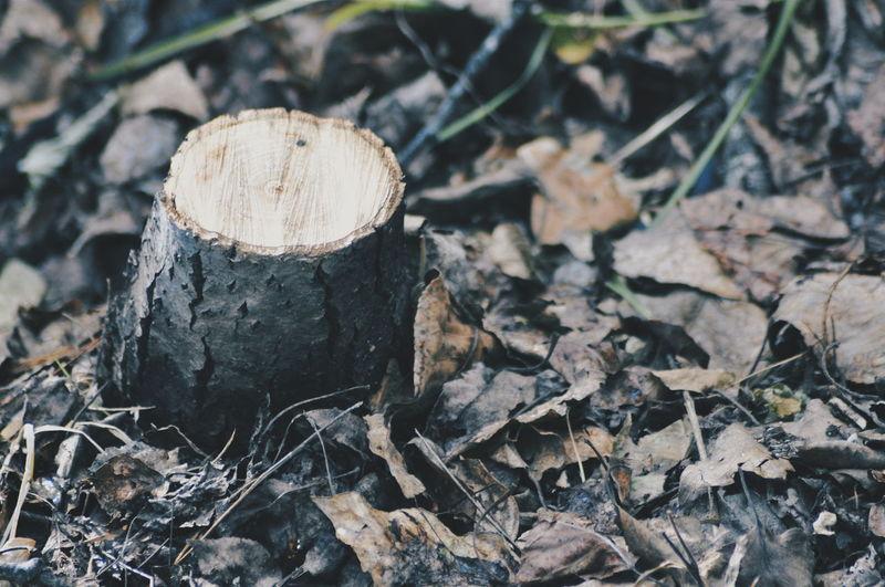 High angle view of tree stump on field