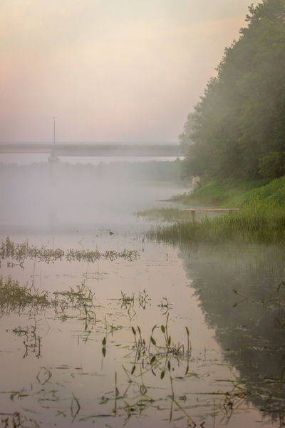 Fog over the river. Early morning. Beauty In Nature Bridge Day Fog Morning Nature No People Outdoors Plant Reflection River River View Scenics Sky Tree Water
