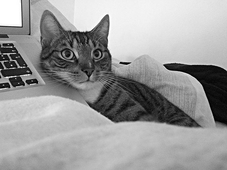 Attentive Cat Cat Catboy Catlove Catman Chillingcat Kitty Cat Lazy Cat Lazycat