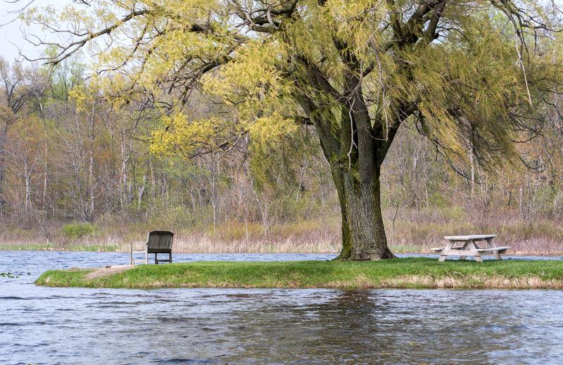Scenic view of lake in park