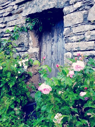 Roses Rusty Rustic Style Doorway Country Decor Country Roses