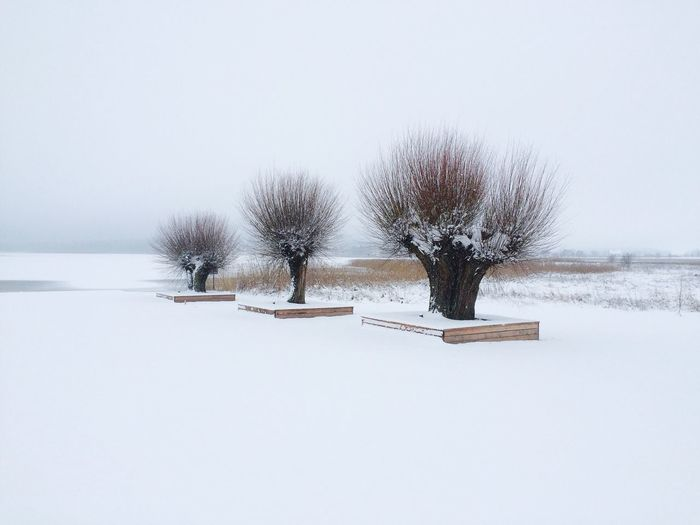 Bare trees on snowcapped field during winter