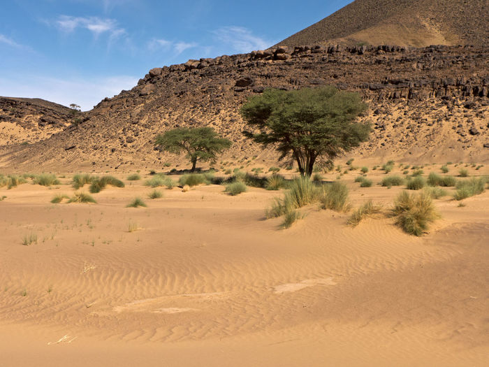 Desert Land Environment Landscape Sand Scenics - Nature Arid Climate Climate Sky Tranquil Scene Sand Dune Tranquility Nature Non-urban Scene Beauty In Nature Day No People Africa Hot Adventure Hiking Trekking