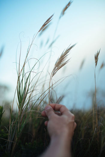 Close-up of person hand on field against sky