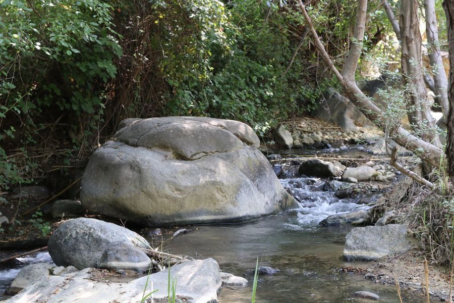 Rock Water Small River Tree Kakopetria Nature Plants No People Cyprus Stream River Natural Beauty Nature_collection Nature Beauty Naturelovers Nature Photography Forest Forest Photography Forestwalk Forest Trees Troodos Small River In Forest Small River With Rocks Nature Lover Nature_perfection