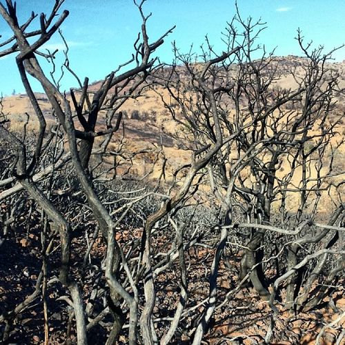 Fire zone near the summit. MtDiablo