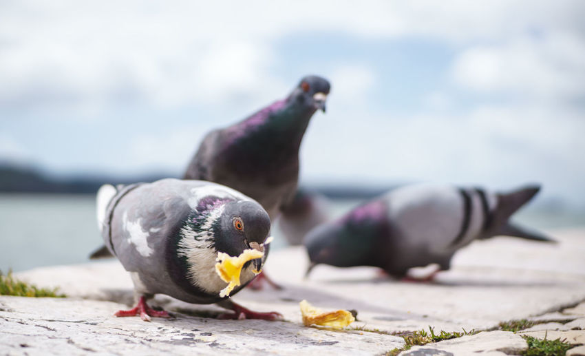 Animal Animal Themes Animal Wildlife Animals In The Wild Bird Close-up Eating Group Of Animals Hungry Selective Focus