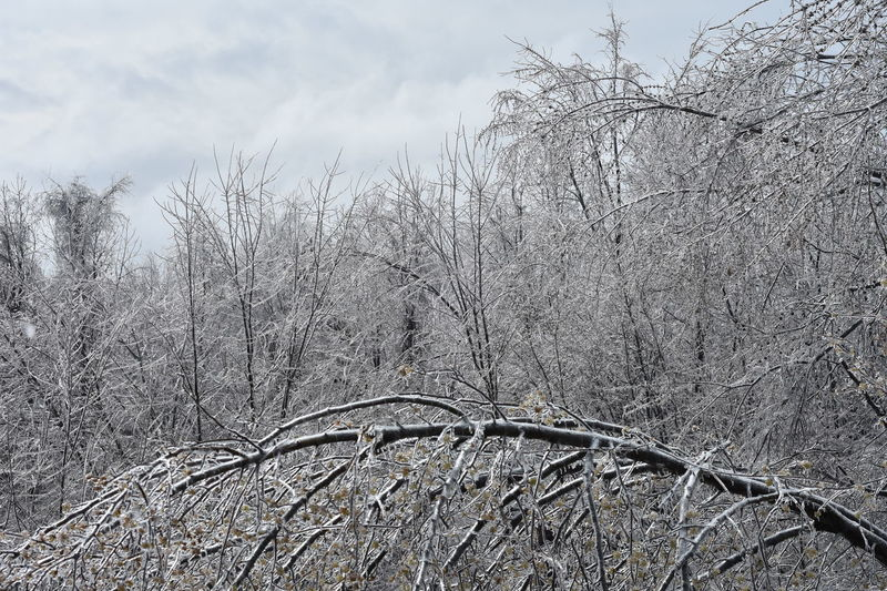 Bare Tree Beauty In Nature Cold Temperature Day Growth Ice Nature Outdoors Sky Tree