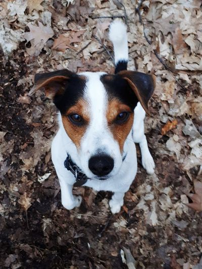 High angle portrait of dog on land