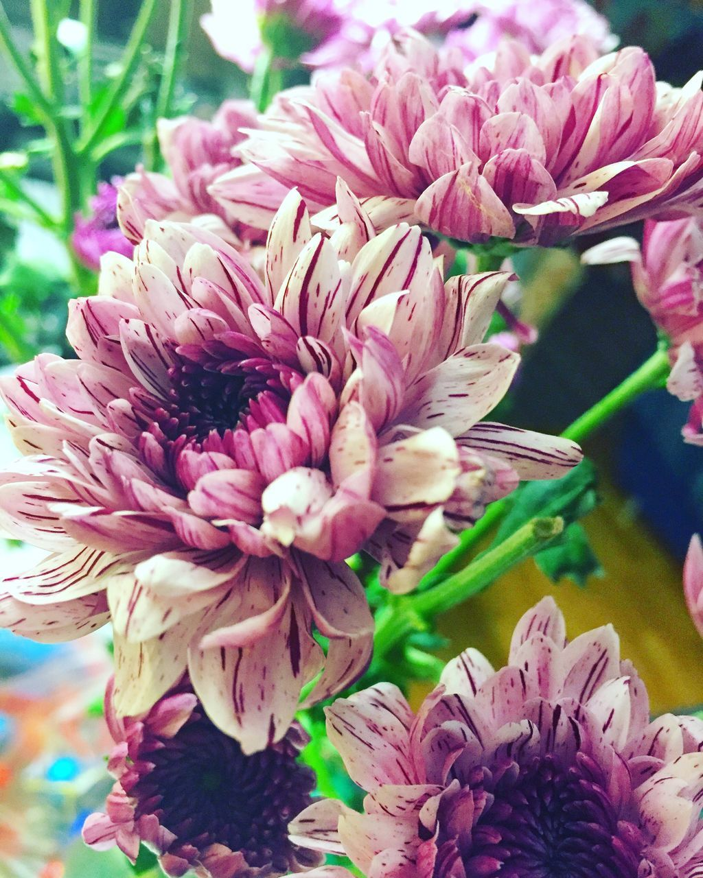 flower, fragility, petal, beauty in nature, freshness, flower head, nature, close-up, pink color, growth, no people, day, focus on foreground, bouquet, outdoors, plant, dahlia, florist