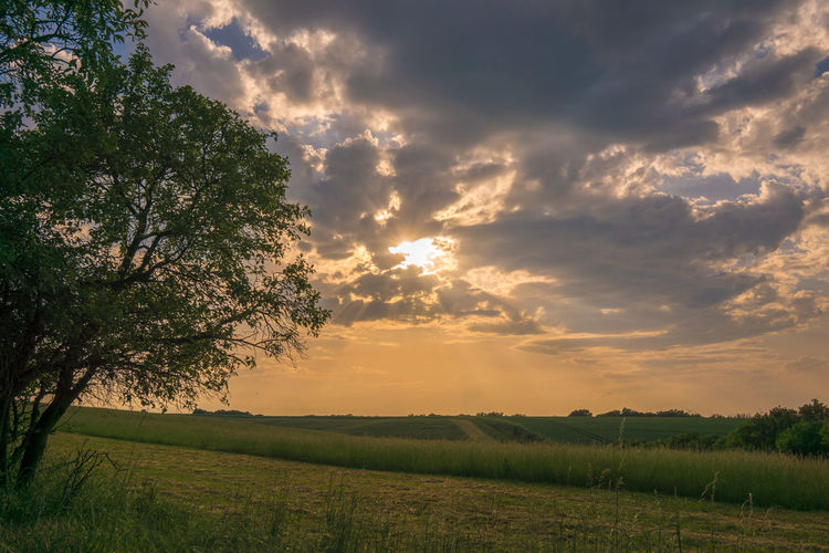 Hello Sun ☀️ Sunset Field Tree Cloud - Sky Dramatic Sky Nature Beauty In Nature Sunlight Sky Landscape Sun Germany Travel Travel Destinations Himmel Deutschland Landschaft Baum 🌳🌲 Landscape_Collection Landscape_photography Bäume Himmel Und Wolken Dirt Road Nature Photography Nature