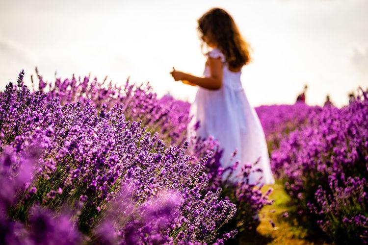 Rear view of woman standing amidst purple flowering plants on field