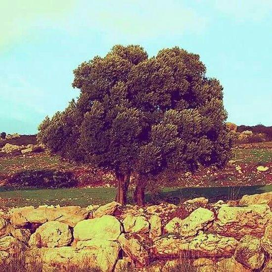 Taking Photos Hugging A Tree Tree_collection  Enjoying Life Sensaciones Nature Beautiful Nature