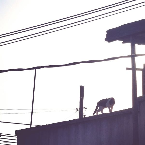 One Animal Silhouette No People Domestic Animals Animals In The Wild Urban Morning Villa Madero Buenos Aires