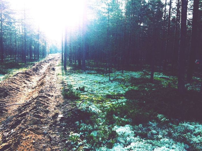 The beautiful forest in Russia 💚👁 First Eyeem Photo