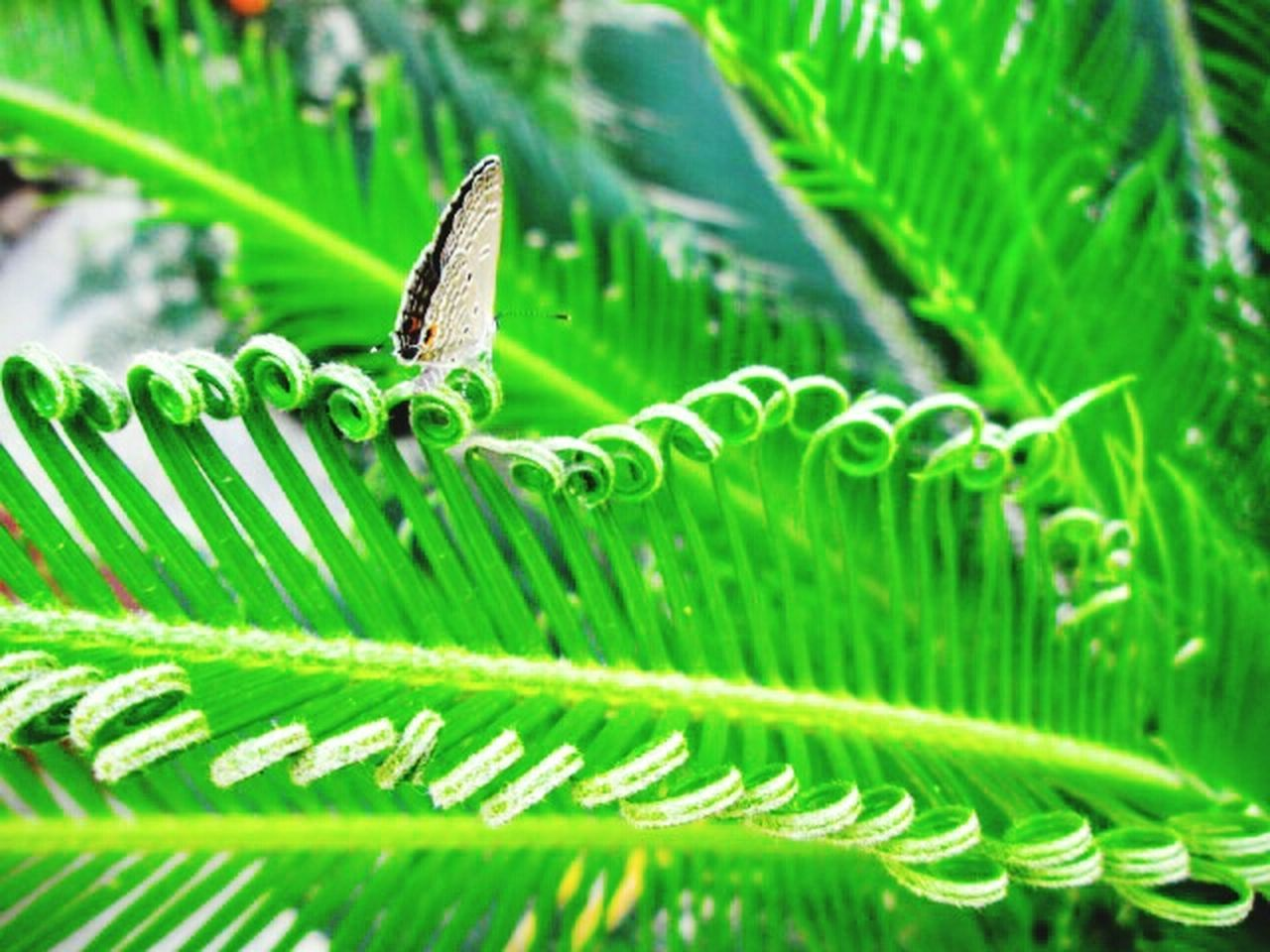 green color, leaf, growth, plant, nature, frond, close-up, one animal, fern, lush foliage, no people, day, animal themes, animals in the wild, beauty in nature, outdoors, freshness, animal wildlife, backgrounds, fragility, banana leaf, grass, flower