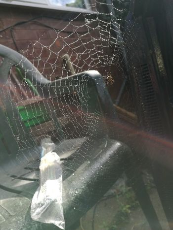 Taken With The Huawei P9 Nature Cobweb Macro Beauty