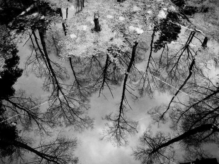 Reflection Water Swamp Blackandwhite Outdoors Kendlmühlfilzen Bavaria Tree Backgrounds Full Frame Sky Close-up Standing Water Calm The Creative - 2019 EyeEm Awards