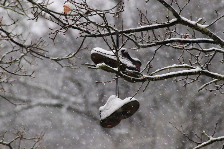 Dead bird on branch during winter