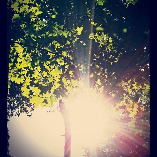 Tree Sun Light Nature Natur