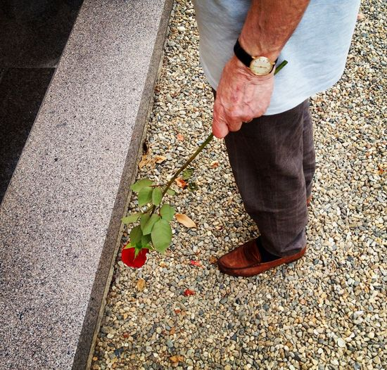Low Section Of Man Holding Rose While Standing On Pebbles