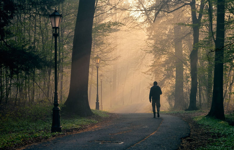Rear view of man walking on footpath amidst trees in foggy weather